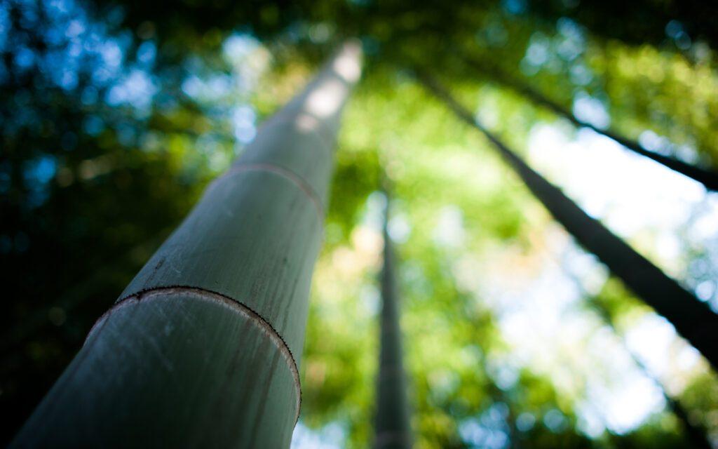 La nostra mission è quella di creare foreste biodinamiche di Bambù Gigante in tutte le regioni italiane