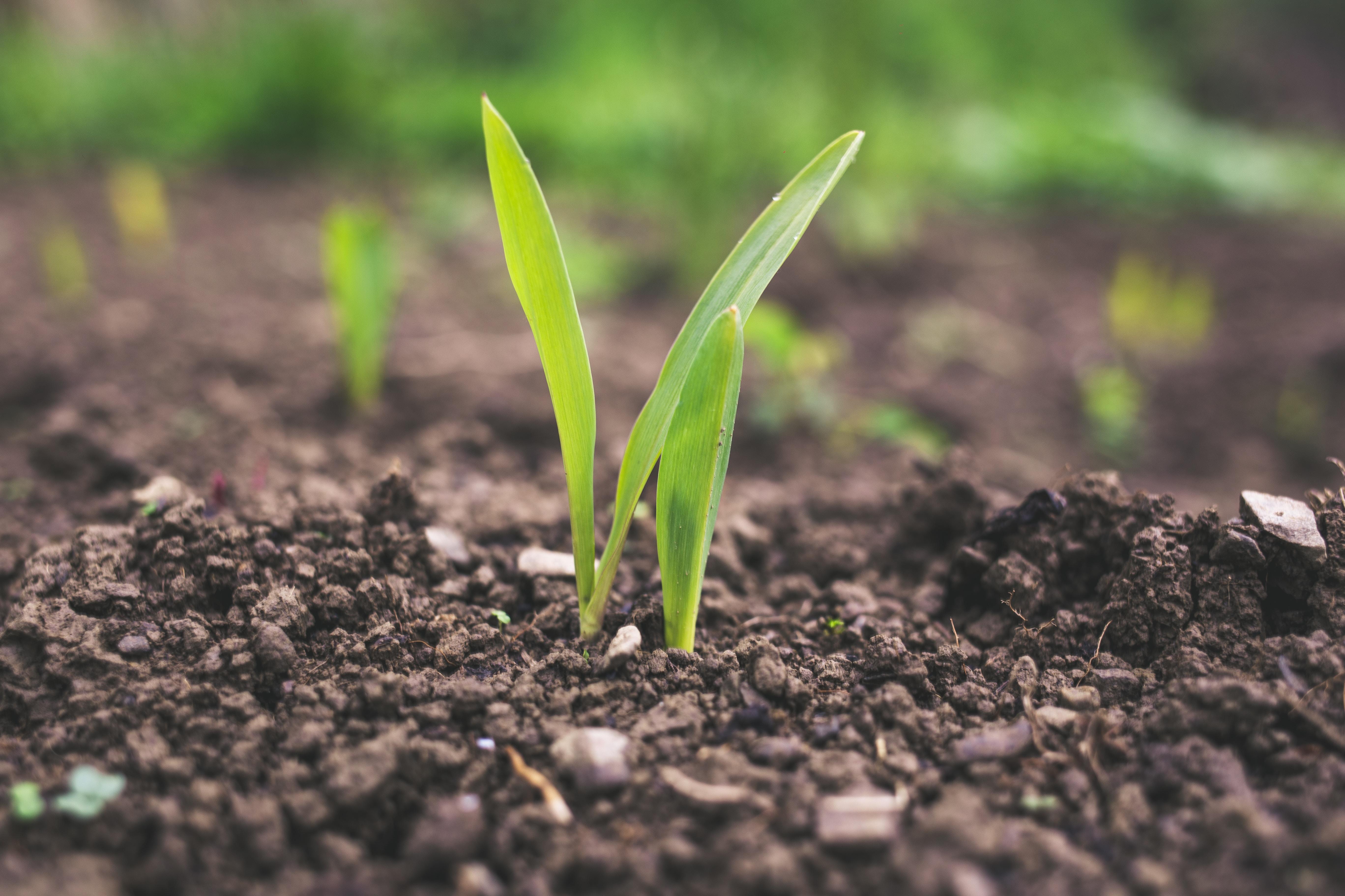 Agricoltura biodinamica: un metodo sostenibile e rispettoso della natura