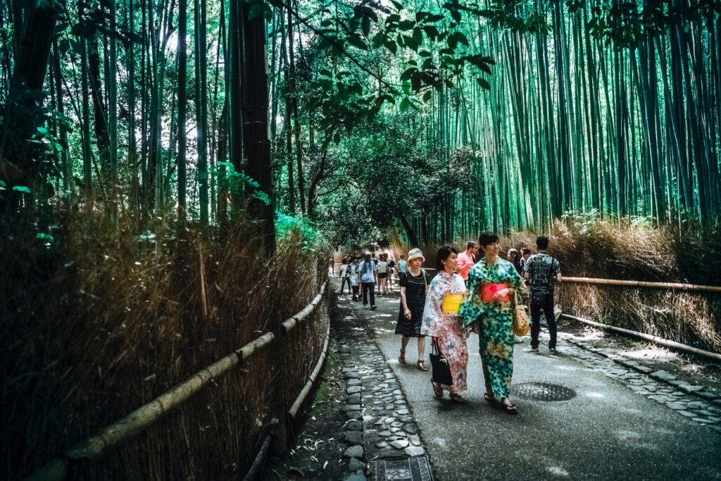 Il bambù nel mondo