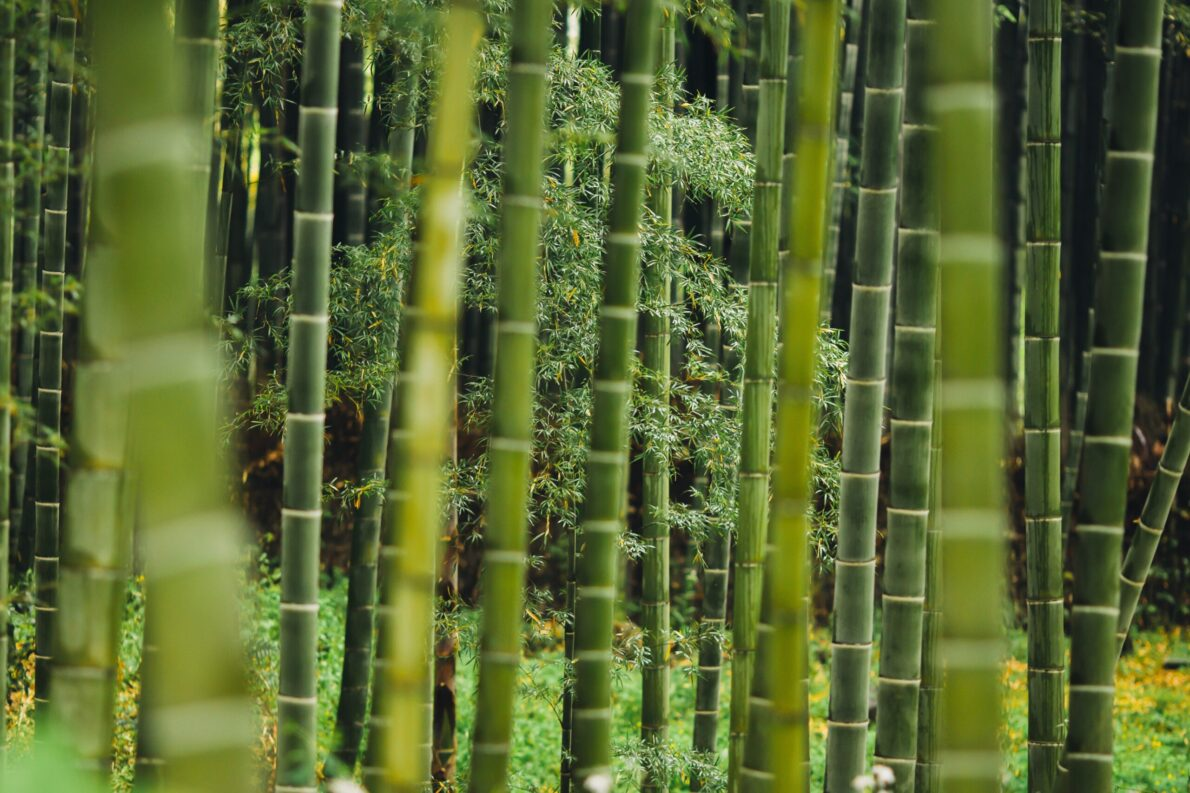 bambù o bamboo: come si scrive correttamente
