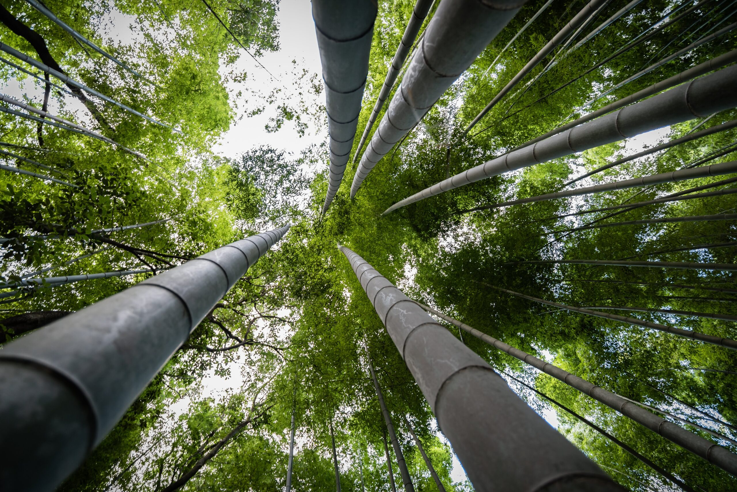 Oro verde: elogio al bambù