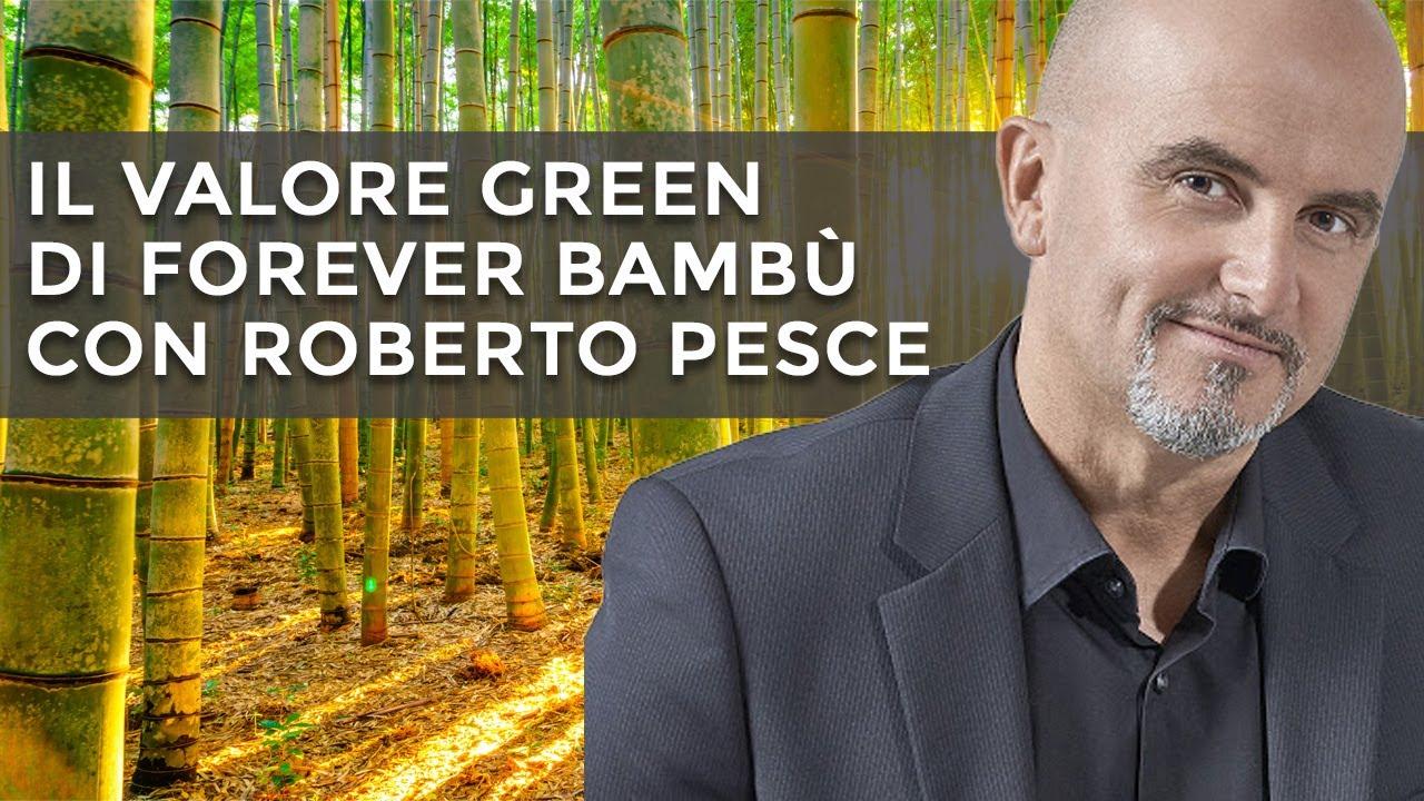 Bambù contro l'inquinamento: il valore Green di Forever Bambù (VIDEO)